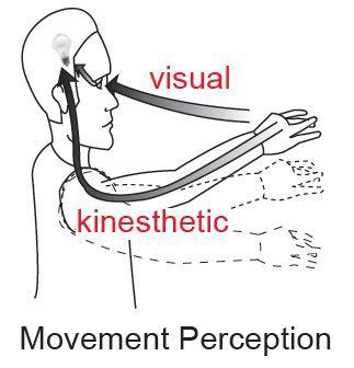sense of kinesthesis